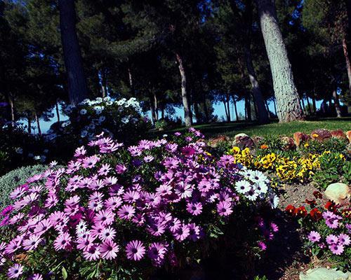 Preciosas flores