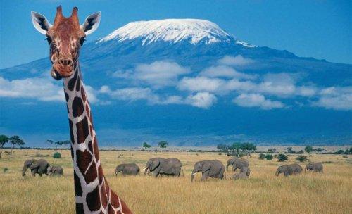 Safaris por Africa