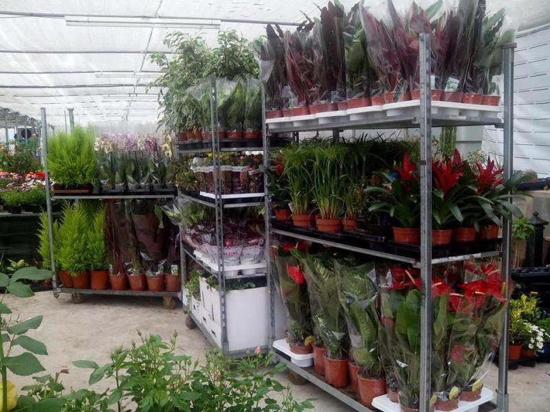 Plantamar viveros florister as para bodas flores asturias for Viveros en asturias